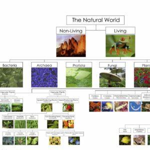 Natural world chart